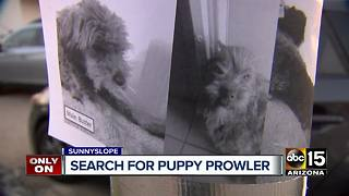North Phoenix neighborhood on the lookout for dog thief - Video