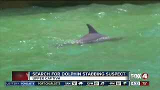 Dolphin found stabbed to death
