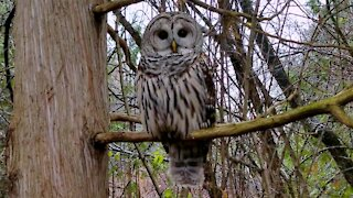 Man has incredible close connection with wild owl in the forest