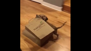Pup Gives Owner A Helpful Paw With The Groceries - Video