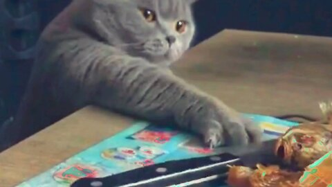 Funny moments of my CAT