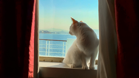 Bobtail Cat Traveling by Ship in Greece - 10 Hour Trip