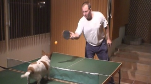 Talented Dog Knows How To Play Ping Pong!
