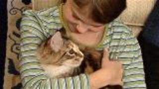 The Best Cats For Kids And Pet Responsibility  - Video