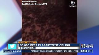 35k bees found in apartment ceiling - Video