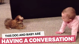 Dog And Baby Have A Full-On Conversation! - Video