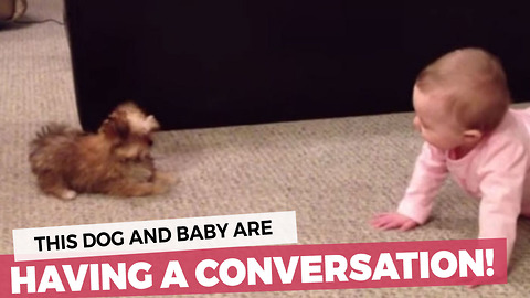 Dog And Baby Have A Full-On Conversation!