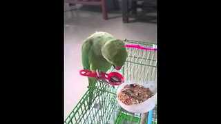 Sophisticated Parrot Uses Spoon To Eat Food