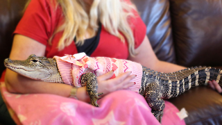 The World's Most Pampered Alligator: BEAST BUDDIES - Video