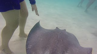 Injured stingrays circle woman in Grand Caymans - Video