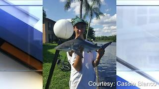 Tampa residents shocked to find bull sharks in Hillsborough River-Digital Short - Video