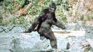 Bigfoot In Numbers - Video