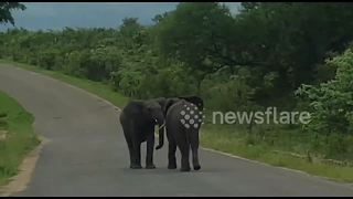 Adorable moment young elephant waits for his struggling friend - Video