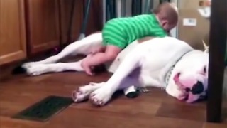 When babies and dogs play together, things get ridiculously cute - Video