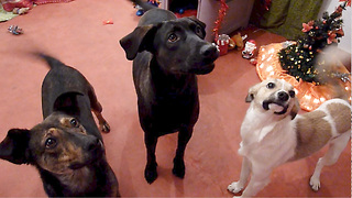 Rescued Dogs Having Their First Christmas Party at Howl Of A Dog - Video
