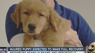 Puppy beaten with metal rod by Tempe student - Video