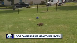 Dog owners live healthier lives
