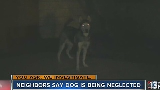 Woman says neighbor's Husky has been chained up outside for three years