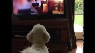 Lively Dog Has Intense Reaction to TV Cat - Video