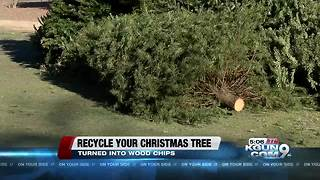 Christmas tree recycling in Tucson