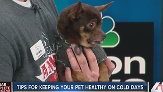 Tips for keeping your pet healthy on cold days - Video