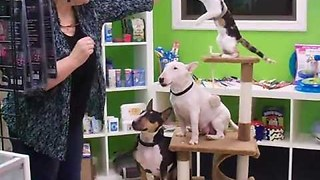 Two dogs and cat balancing on a cat tree - Video