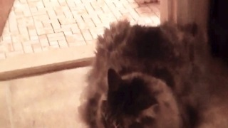 Cat won't let dog leave the bathroom - Video