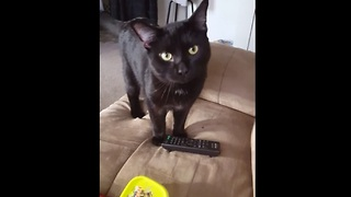 Baggy the cat absolutely loves to play fetch - Video