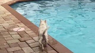 Watch As This Excited Westie Shows Off Incredible Diving Skills