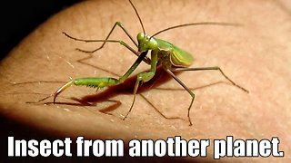 Mantis - Insect from another planet - Video