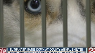 Euthanasia Rates Down at County Animal Shelter - Video