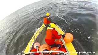Young Humpback Whale Disentangled From Buoy Line - Video