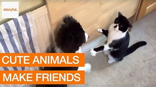 Cat and Puppy Enjoy Their Friendly Boxing Match - Video