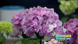 Bailey Nurseries - Video