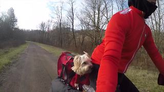 Dog and owner use electric cargo bike for camping adventure - Video