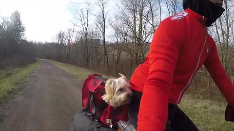 Dog and owner use electric cargo bike for camping adventure
