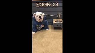 Bulldog gets water on tap from custom doghouse - Video