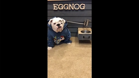 Bulldog gets water on tap from custom doghouse