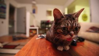 BUB MEETS MOTH - Video