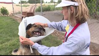 West Valley Humane Society looks ahead with new Board of Directors - Video