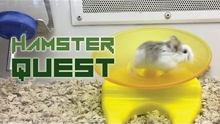 Hamster Just Can't Get Enough of This Running Wheel - Video