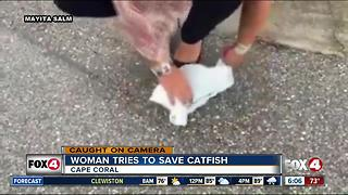 Woman finds 'Walking Catfish' in parking lot. - Video