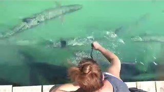 Giant Fish Leaps Out at Tourist for Dinner - Video