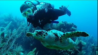 Diver's magical interaction with endangered sea turtle is no accident - Video