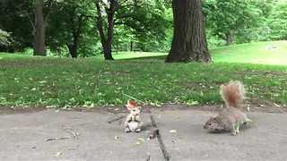 Squirrel Statue Confuses Real-Life Squirrels - Video