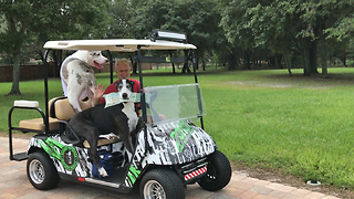 Funny Great Danes Golf Cart Newspaper Delivery  - Video