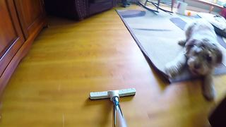 """Dog decides to """"help"""" owner with the vacuuming"""