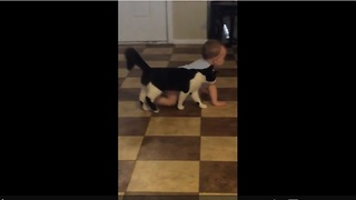 Cat loves baby, follows his every move - Video