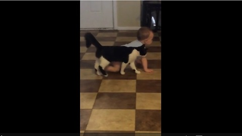 This Cat Shows Affection For A Boy By Following His Every Move