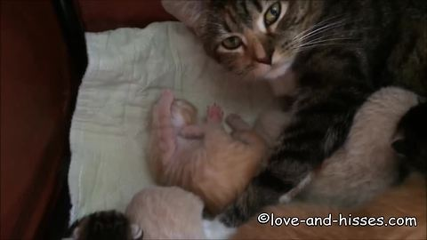 Tiny newborn kitten learns how to clean paws